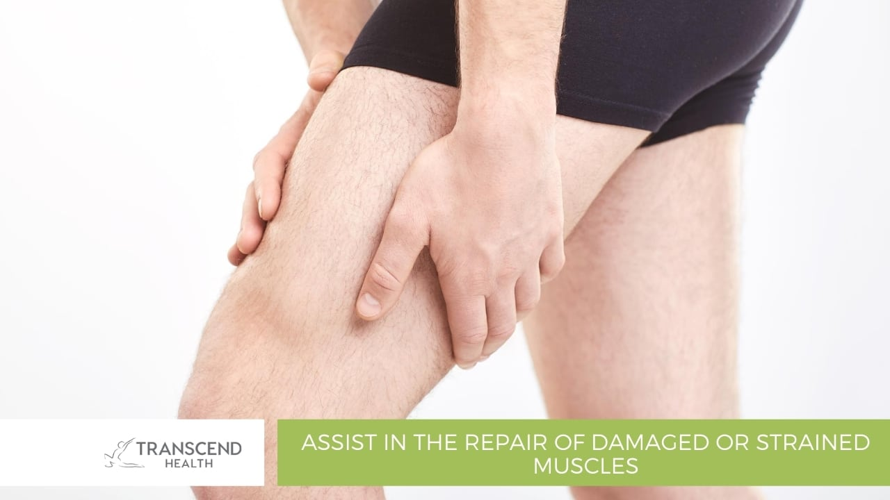 Assist in the repair of damaged or strained muscles