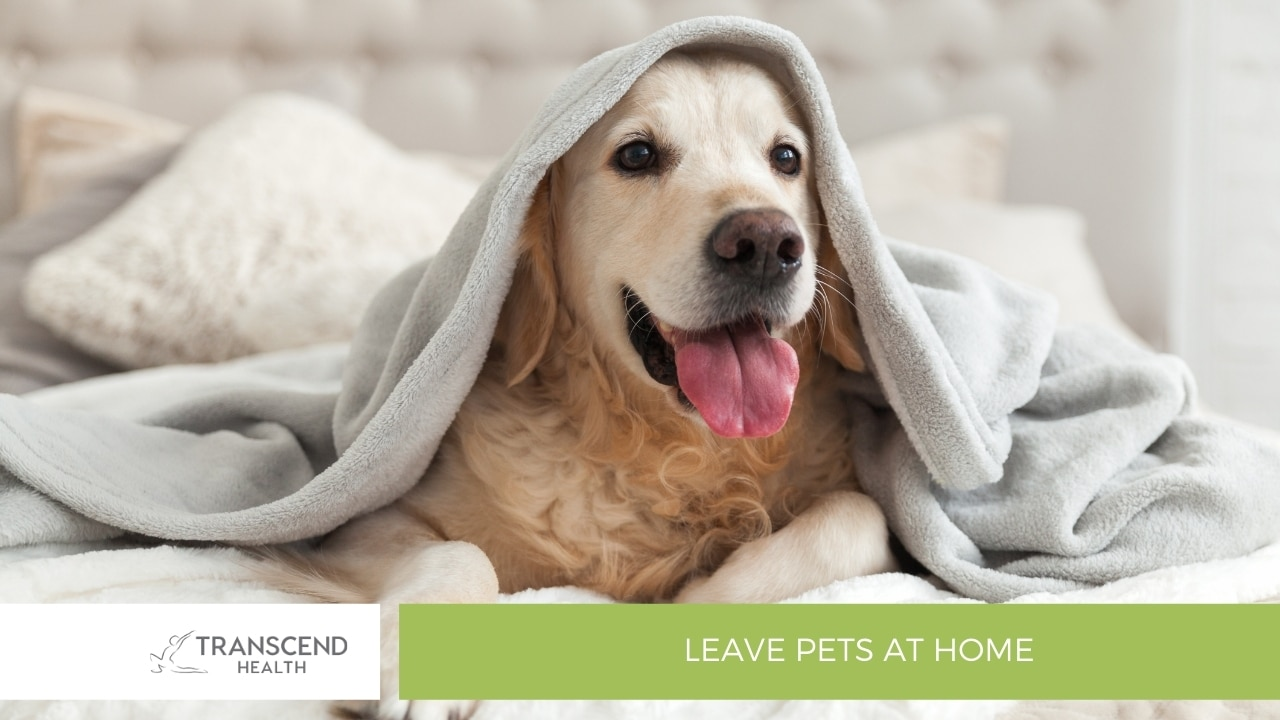Leave Pets at Home